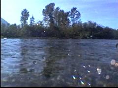 1991 salmon run, salmon in river, #2 Stock Footage