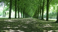 Stock Video Footage of Tree Lined Park