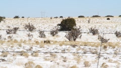 Desert barb wire Stock Footage
