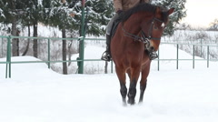 horses playing in the snow stallions galope equestrian21 - stock footage