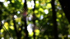 Leaf leaves spider web forest trees background217156 Stock Footage