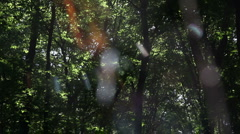 Leaf leaves spider web forest trees background81156546 Stock Footage