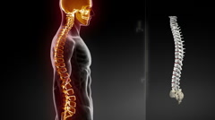 Human spine pain concept Stock Footage