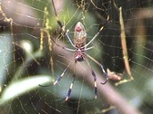 Stock Video Footage of Spider in web