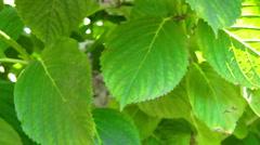 Green garden Stock Footage
