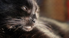 Cute black cat rests and yawns Stock Footage