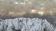 Shaded snowy hedge, distant out of focus sunlit traffic Stock Footage