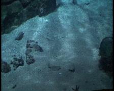Hidden fish Stock Footage