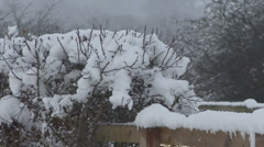 Snow on hedge and fence. Stock Footage