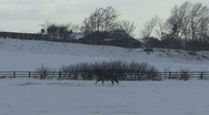 Horse and rider canter in snow. Stock Footage