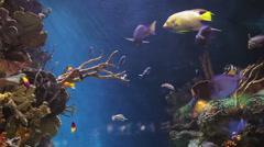 Fish sealife marine aquarium wildlife underwater Stock Footage