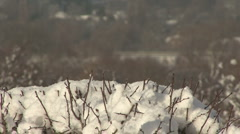 Snow on hedge in sun, distant traffic out of focus. Stock Footage