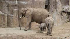 elephants  - stock footage