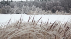 Reeds and trees glazed in ice after freezing rain Stock Footage