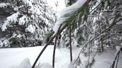 Jeep, winter wood - stock footage