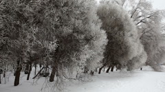 Frozen trees Stock Footage
