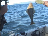 Stock Video Footage of Alaskan Halibut Fishing
