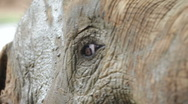 Elephant Stock Footage