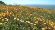 Ocean Flowers Stock Footage