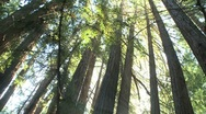Forest and Trees Stock Footage