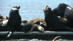 Seals - stock footage