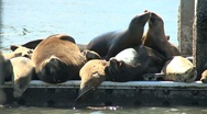 Seals on a Pier Stock Footage