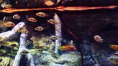 fish sealife marine aquarium wildlife underwater - stock footage