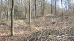 Coppiced Deciduous Woodland Clearing in Winter, UK Stock Footage