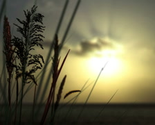 Sunset Reeds with Butterflies - stock footage