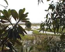 Landscape, ricefield - stock footage