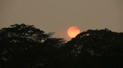 sunset rainforest - stock footage