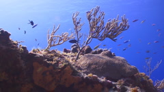 Rush hour on the coral reef Stock Footage