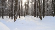 In winter forest park covered with white snow on snowy day - HD 1920X1080 Stock Footage