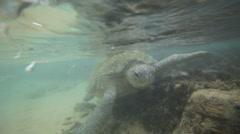 turtle - stock footage