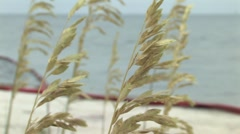SEA GRASS AND OIL BOOM Stock Footage