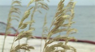 Stock Video Footage of SEA GRASS AND OIL BOOM