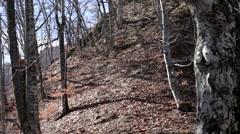 Man running through forest Stock Footage