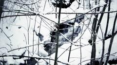 Snowy River Fluss Landscape Schneelandschaft Stock Footage