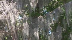 Florida Scenic Stock Footage