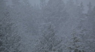 Snow falling with forest in the background Stock Footage