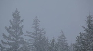 Snow falling with peaks of trees in the background Stock Footage
