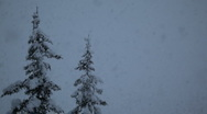 Snow falling in front of two pine trees Stock Footage