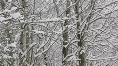 Snow Falling From Trees Stock Footage