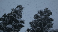 Snow falling in front of two trees Stock Footage