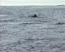 Skin-diver plunges under water Stock Footage