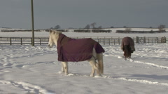 Two horses or ponies in snow covered paddock. Stock Footage