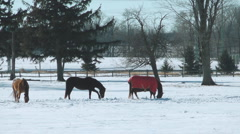 Winter Horses Stock Footage