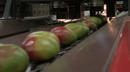Green and red mangos on conveyer belt Stock Footage