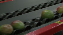Mangos rolling on transportation belt Stock Footage