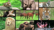 Stock Video Footage of Animal Composite